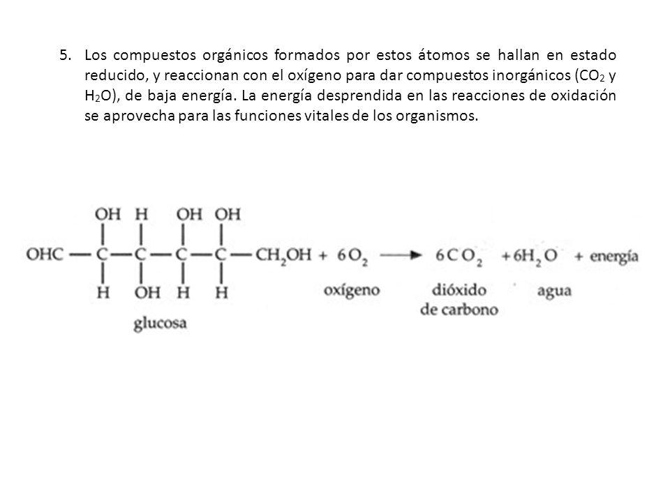 5.Los compuestos orgánicos formados por estos átomos se hallan en estado reducido, y reaccionan con el oxígeno para dar compuestos inorgánicos (CO 2 y