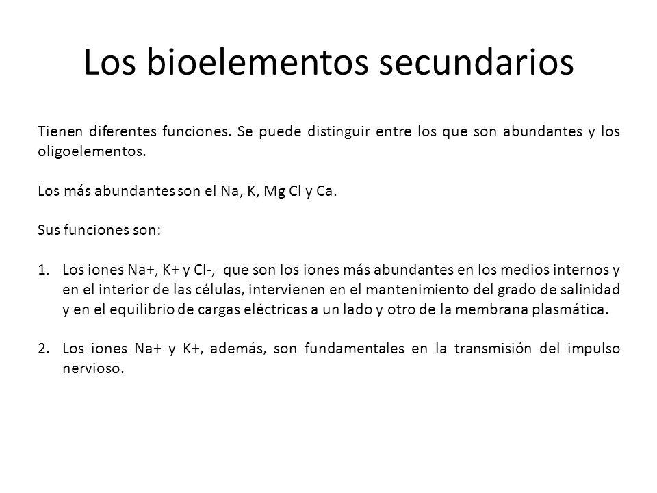Los bioelementos secundarios Tienen diferentes funciones. Se puede distinguir entre los que son abundantes y los oligoelementos. Los más abundantes so