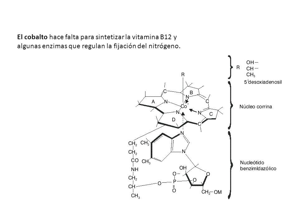 El cobalto hace falta para sintetizar la vitamina B12 y algunas enzimas que regulan la fijación del nitrógeno.