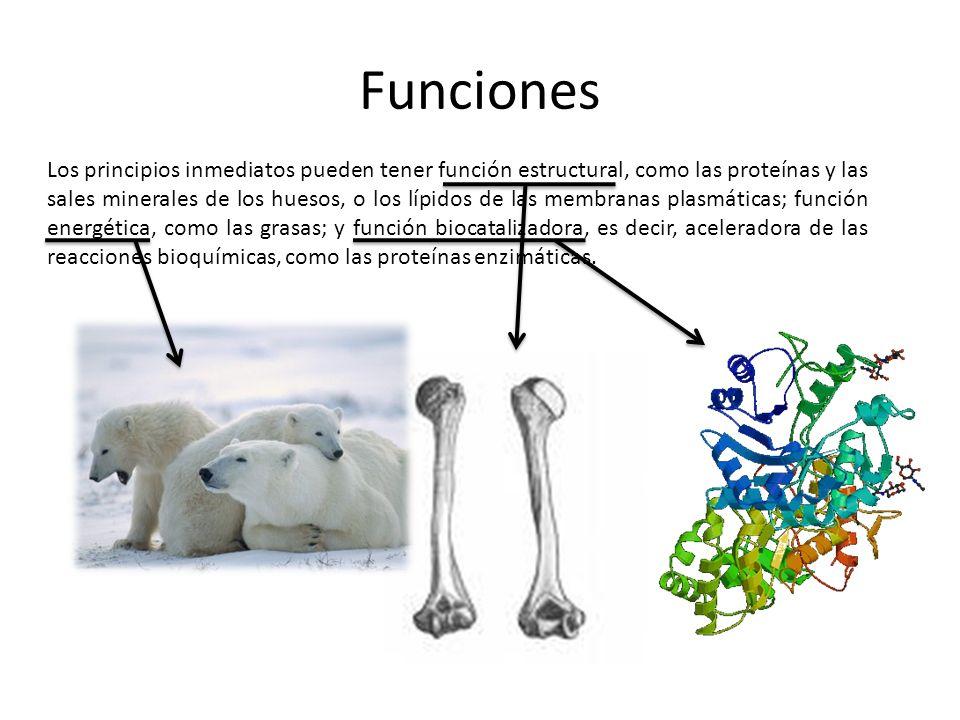 Los principios inmediatos pueden tener función estructural, como las proteínas y las sales minerales de los huesos, o los lípidos de las membranas pla