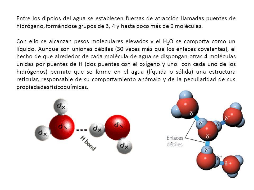 Entre los dipolos del agua se establecen fuerzas de atracción llamadas puentes de hidrógeno, formándose grupos de 3, 4 y hasta poco más de 9 moléculas