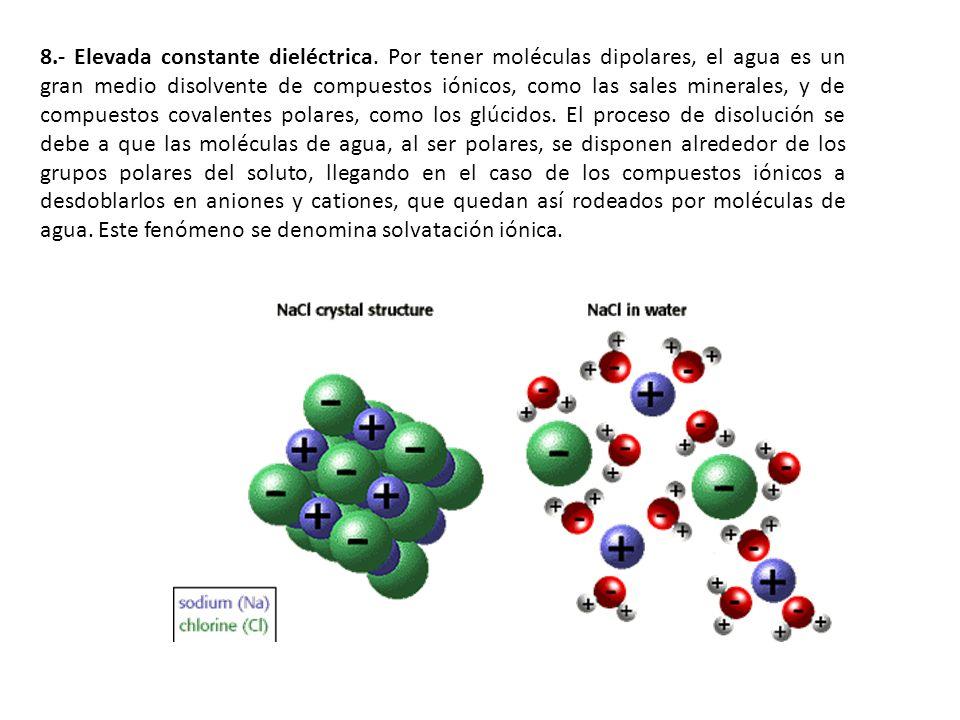 8.- Elevada constante dieléctrica. Por tener moléculas dipolares, el agua es un gran medio disolvente de compuestos iónicos, como las sales minerales,