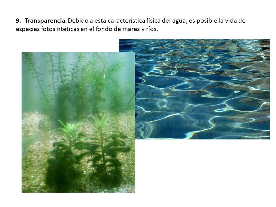9.- Transparencia. Debido a esta característica física del agua, es posible la vida de especies fotosintéticas en el fondo de mares y ríos.