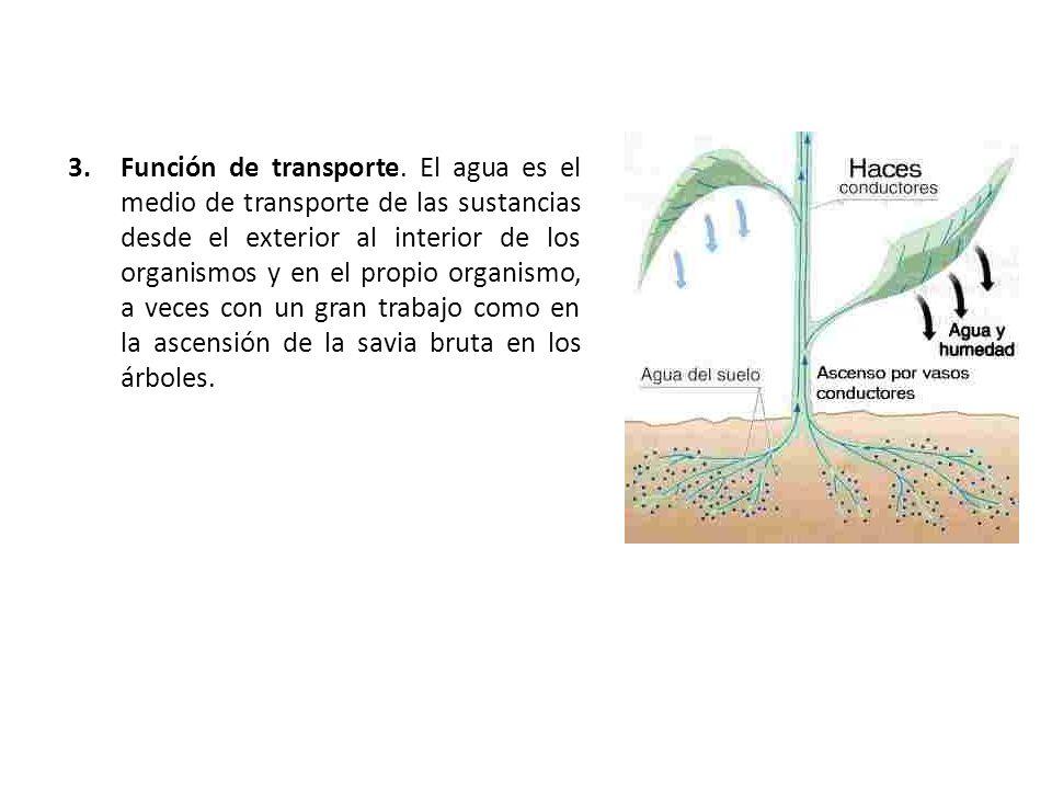 3.Función de transporte. El agua es el medio de transporte de las sustancias desde el exterior al interior de los organismos y en el propio organismo,