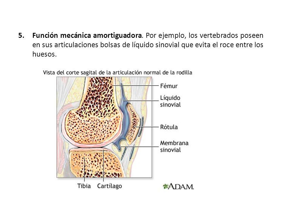 5.Función mecánica amortiguadora. Por ejemplo, los vertebrados poseen en sus articulaciones bolsas de líquido sinovial que evita el roce entre los hue