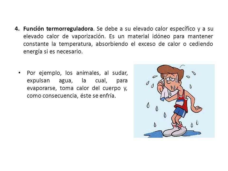 4.Función termorreguladora. Se debe a su elevado calor específico y a su elevado calor de vaporización. Es un material idóneo para mantener constante