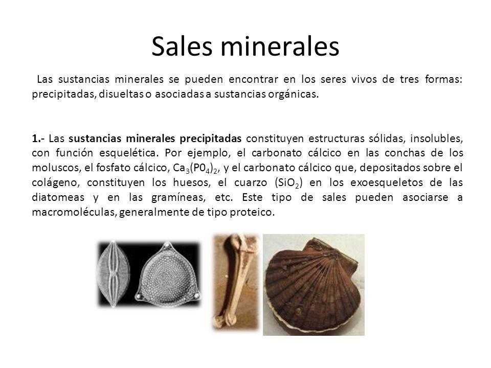 Sales minerales Las sustancias minerales se pueden encontrar en los seres vivos de tres formas: precipitadas, disueltas o asociadas a sustancias orgán