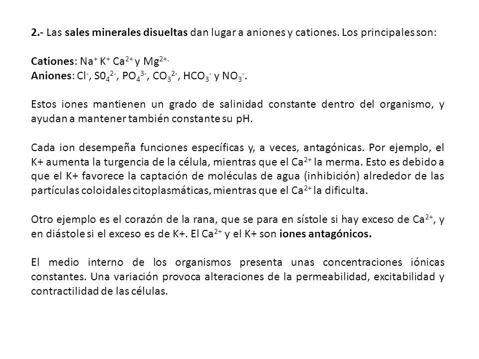 2.- Las sales minerales disueltas dan lugar a aniones y cationes. Los principales son: Cationes: Na + K + Ca 2+ y Mg 2+. Aniones: Cl -, S0 4 2-, PO 4