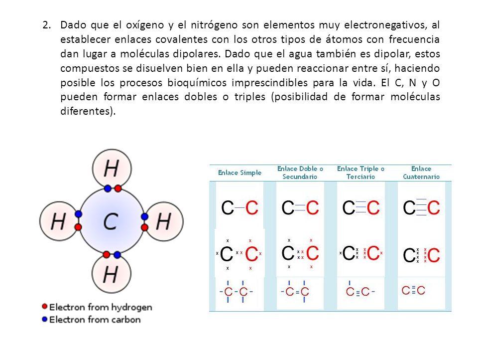 2.Dado que el oxígeno y el nitrógeno son elementos muy electronegativos, al establecer enlaces covalentes con los otros tipos de átomos con frecuencia
