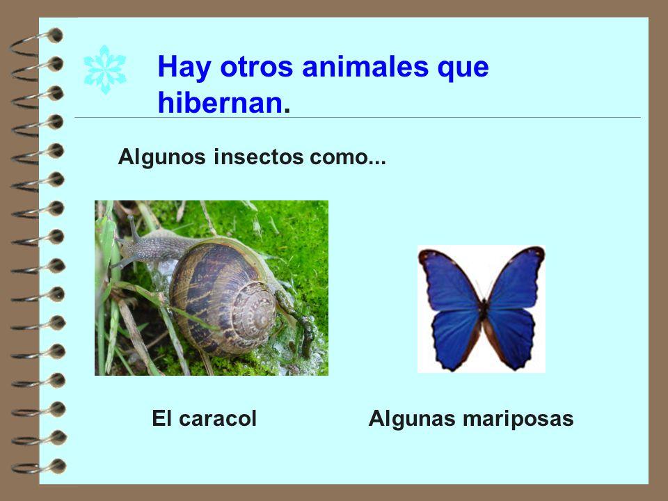 ¿Qué es hibernar? Hibernar es pasar el invierno durmiendo. Durante este tiempo, generalmente, los animales no comen, consumen las reservas que han acu