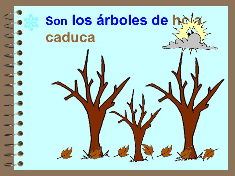 En el invierno algunos árboles pierden las hojas.