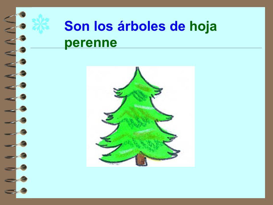 Otros árboles no pierden las hojas en invierno. pinos cipreses abetos olivos