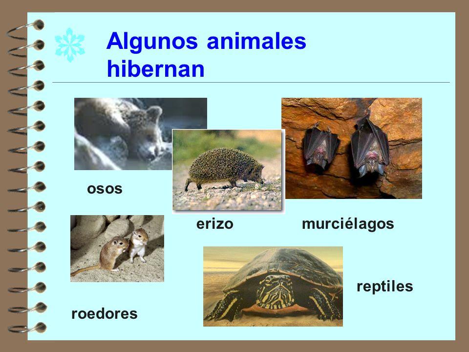 Algunos animales hibernan osos murciélagos roedores reptiles erizo