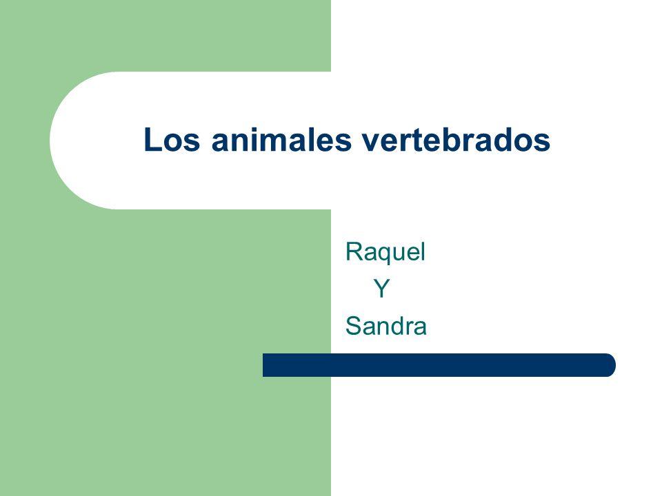 Los animales vertebrados Raquel Y Sandra