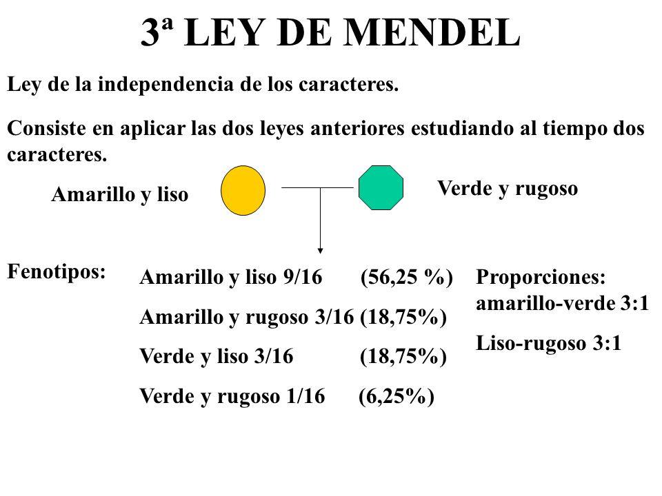 3ª LEY DE MENDEL Consiste en aplicar las dos leyes anteriores estudiando al tiempo dos caracteres. Ley de la independencia de los caracteres. Amarillo