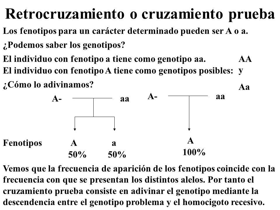 Retrocruzamiento o cruzamiento prueba Los fenotipos para un carácter determinado pueden ser A o a. ¿Podemos saber los genotipos? El individuo con feno