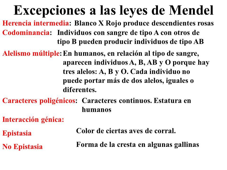 Excepciones a las leyes de Mendel Herencia intermedia:Blanco X Rojo produce descendientes rosas Codominancia:Individuos con sangre de tipo A con otros