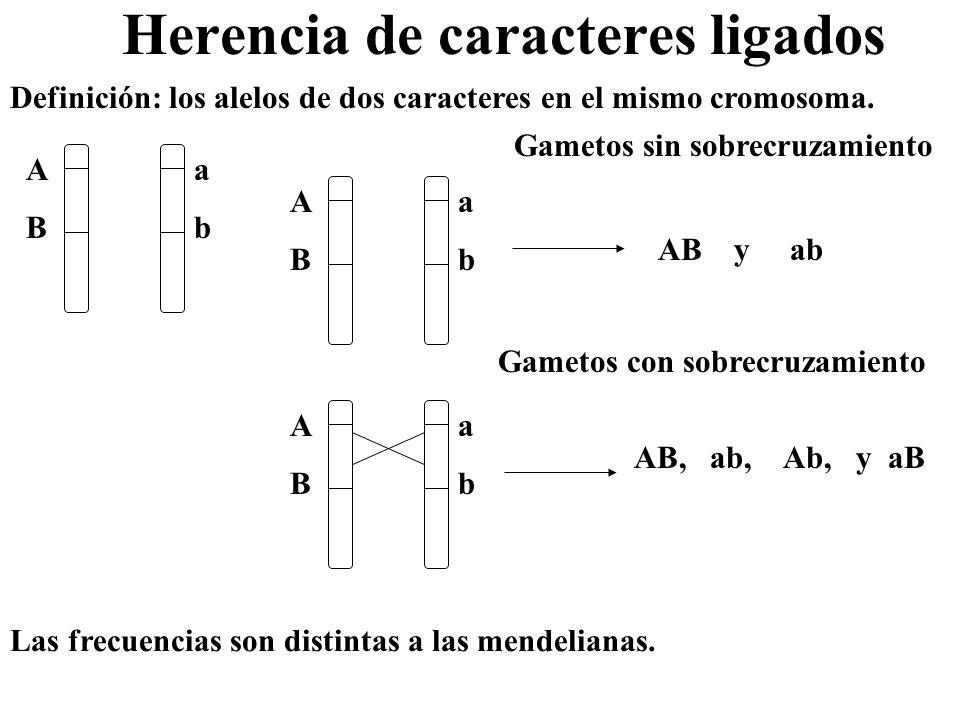 Herencia de caracteres ligados Definición: los alelos de dos caracteres en el mismo cromosoma. ABAB abab ABAB abab Gametos sin sobrecruzamiento Gameto