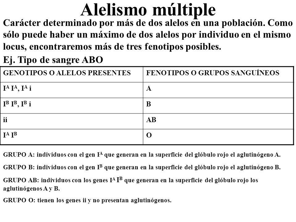 Alelismo múltiple Carácter determinado por más de dos alelos en una población. Como sólo puede haber un máximo de dos alelos por individuo en el mismo