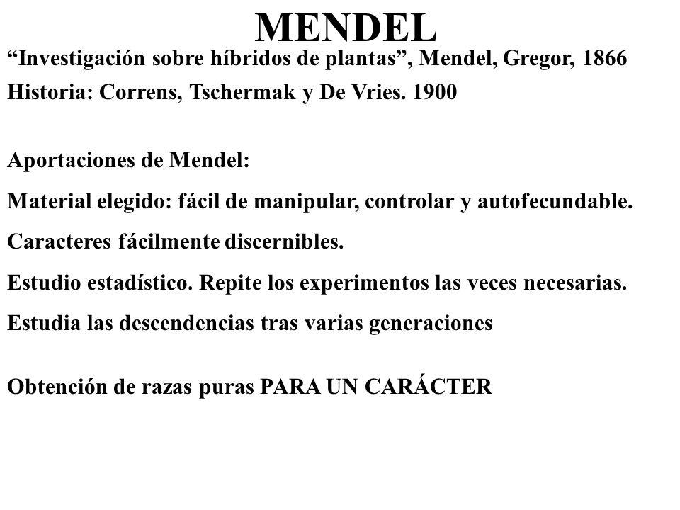 MENDEL Investigación sobre híbridos de plantas, Mendel, Gregor, 1866 Historia: Correns, Tschermak y De Vries. 1900 Obtención de razas puras PARA UN CA