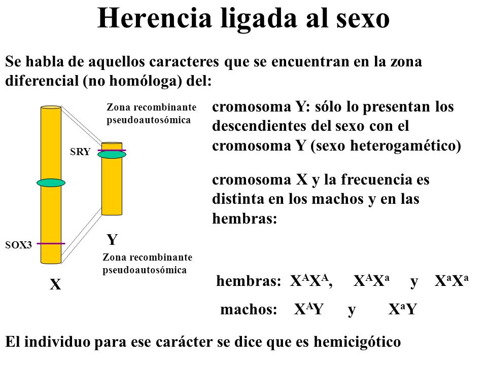 Herencia ligada al sexo Se habla de aquellos caracteres que se encuentran en la zona diferencial (no homóloga) del: cromosoma Y: sólo lo presentan los