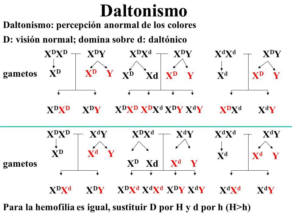 Daltonismo Daltonismo: percepción anormal de los colores D: visión normal; domina sobre d: daltónico gametos X D X D X D Y X D X D Y X D X D X D Y X D