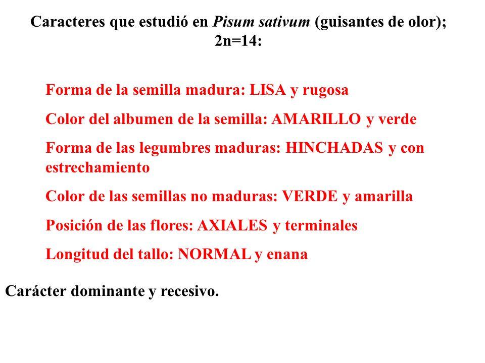 Caracteres que estudió en Pisum sativum (guisantes de olor); 2n=14: Forma de la semilla madura: LISA y rugosa Color del albumen de la semilla: AMARILL