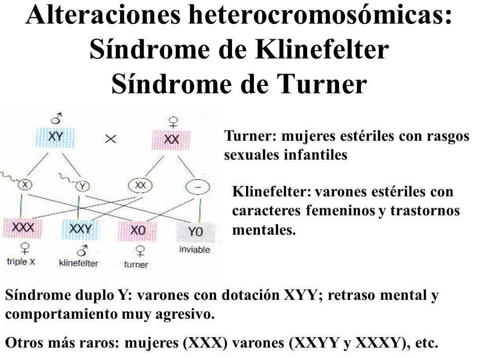 Alteraciones heterocromosómicas: Síndrome de Klinefelter Síndrome de Turner Turner: mujeres estériles con rasgos sexuales infantiles Klinefelter: varo