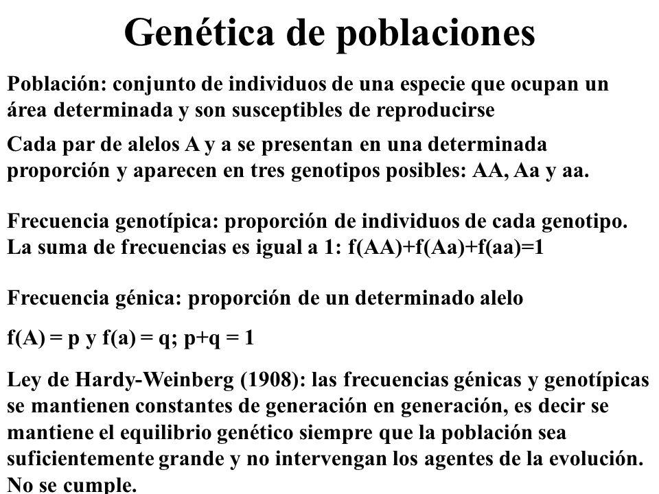 Genética de poblaciones Población: conjunto de individuos de una especie que ocupan un área determinada y son susceptibles de reproducirse Cada par de