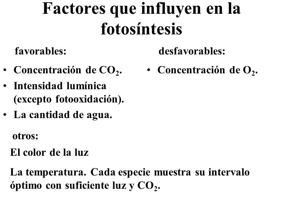 Factores que influyen en la fotosíntesis Concentración de CO 2. Intensidad lumínica (excepto fotooxidación). La cantidad de agua. Concentración de O 2