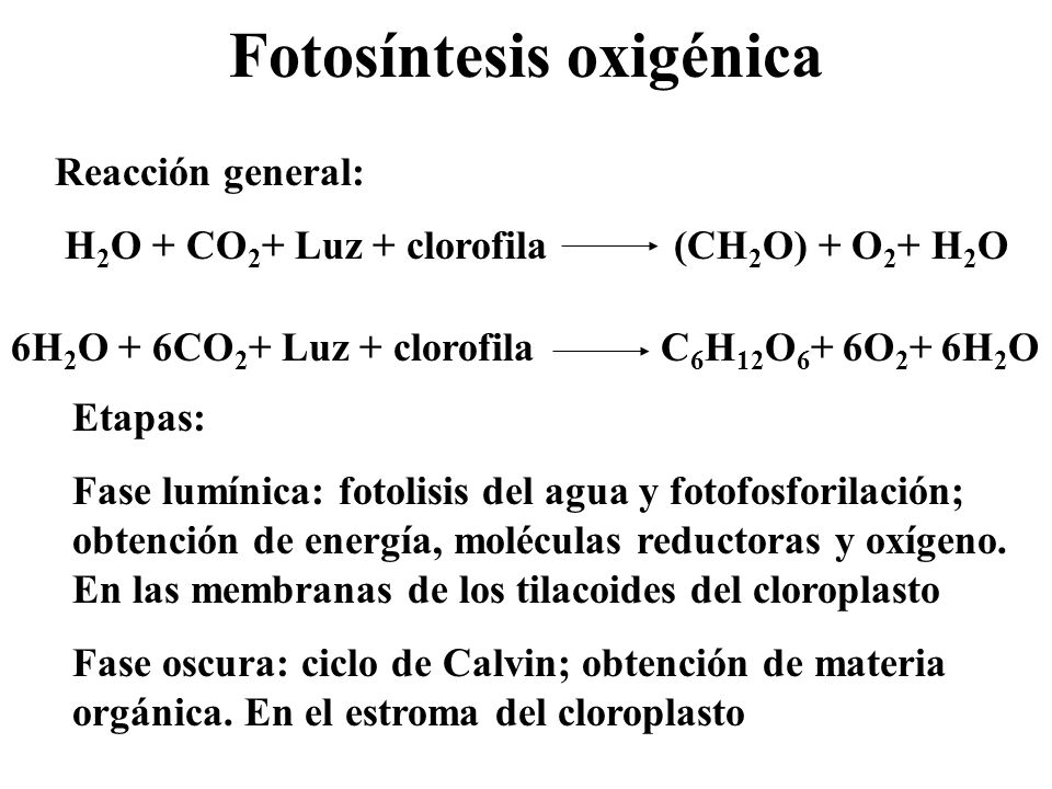 Fotosíntesis oxigénica Reacción general: H 2 O + CO 2 + Luz + clorofila (CH 2 O) + O 2 + H 2 O 6H 2 O + 6CO 2 + Luz + clorofila C 6 H 12 O 6 + 6O 2 +