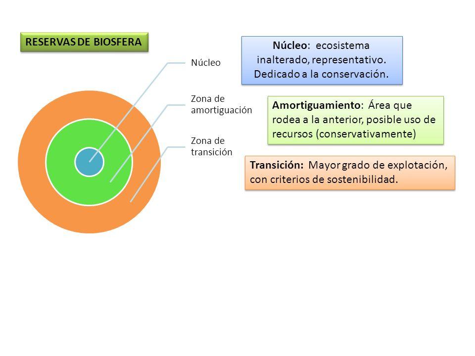 Núcleo Zona de amortiguación Zona de transición RESERVAS DE BIOSFERA Transición: Mayor grado de explotación, con criterios de sostenibilidad. Núcleo: