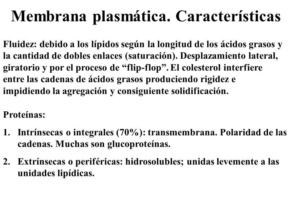 Membrana plasmática. Características Fluidez: debido a los lípidos según la longitud de los ácidos grasos y la cantidad de dobles enlaces (saturación)