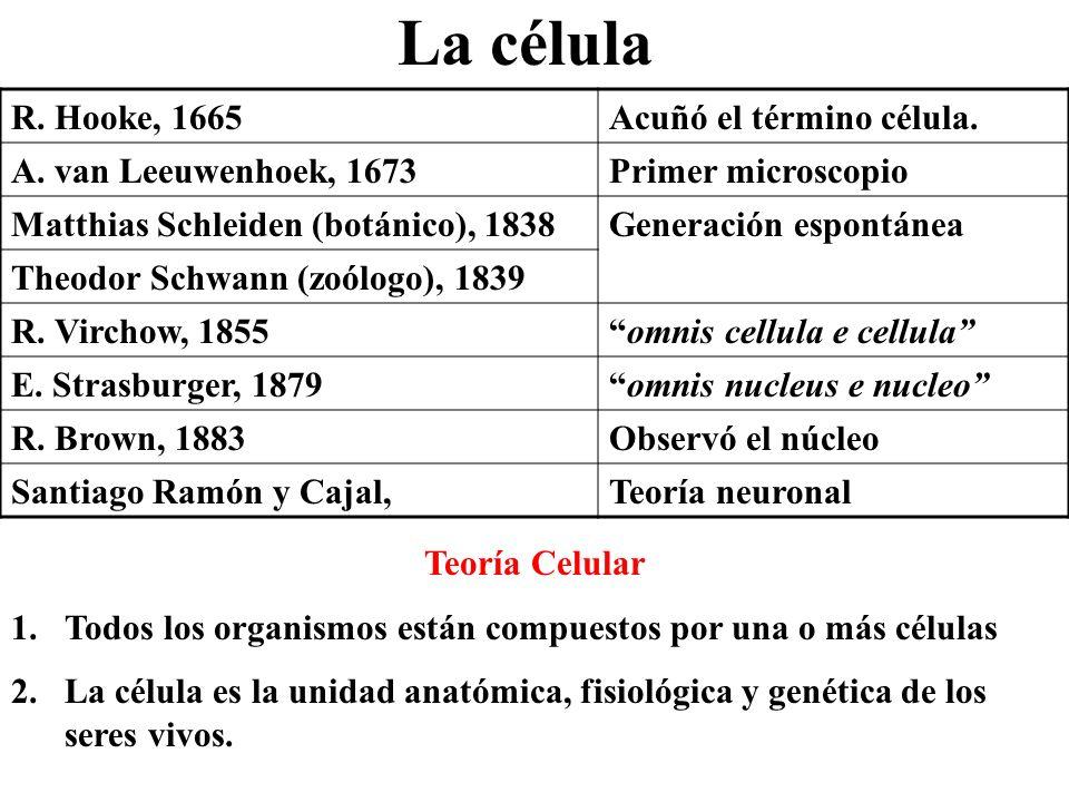 La célula R. Hooke, 1665Acuñó el término célula. A. van Leeuwenhoek, 1673Primer microscopio Matthias Schleiden (botánico), 1838Generación espontánea T