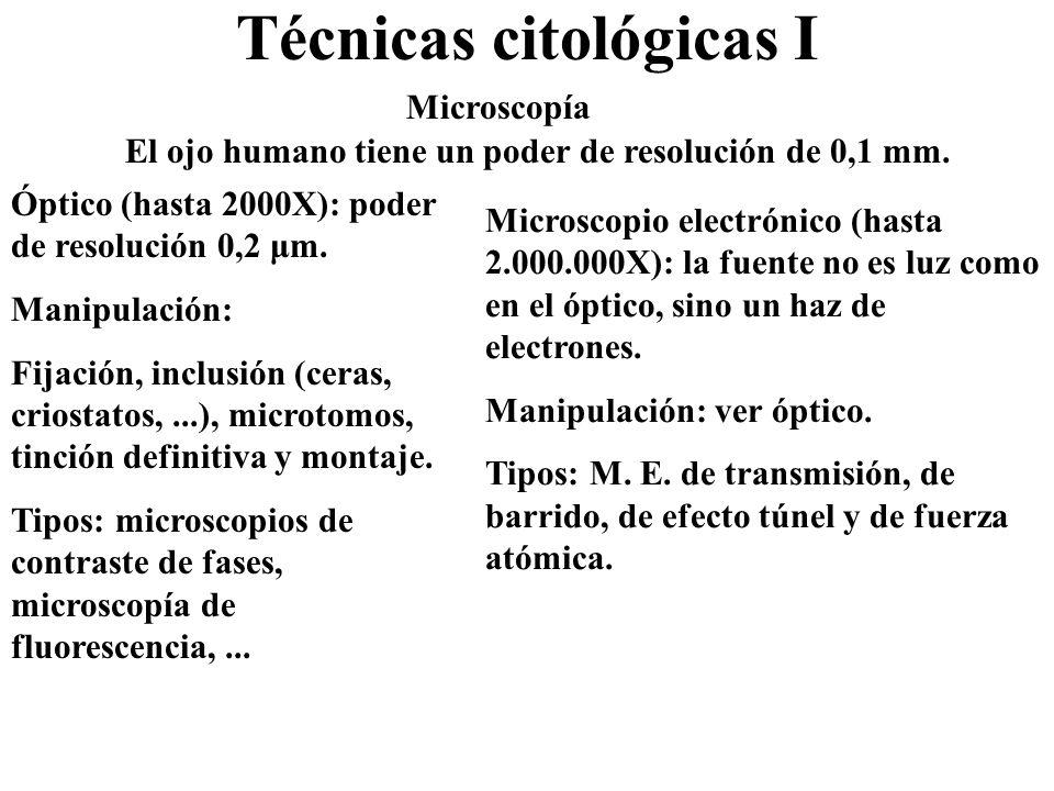 Técnicas citológicas II 1.Cultivo in vitro.