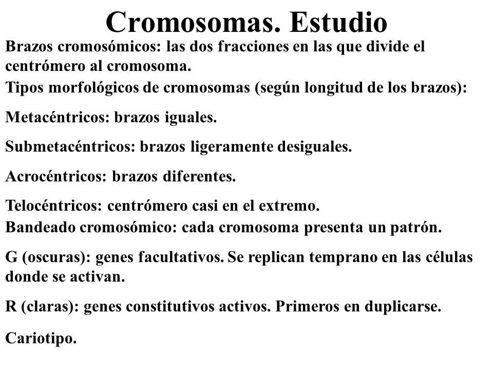 Cromosomas. Estudio Tipos morfológicos de cromosomas (según longitud de los brazos): Metacéntricos: brazos iguales. Submetacéntricos: brazos ligeramen