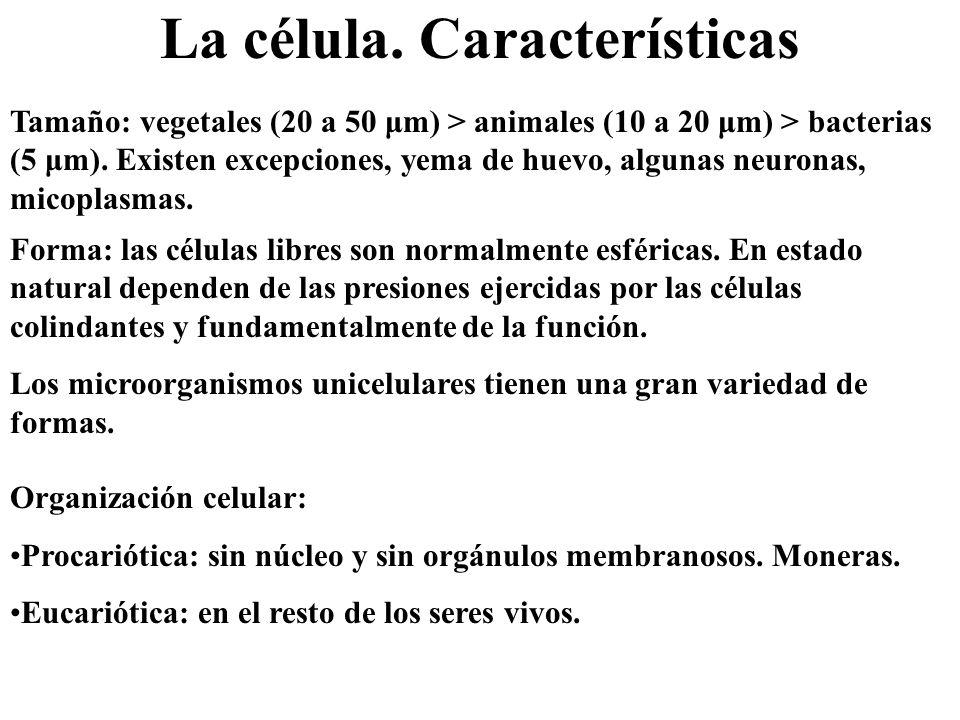 La célula. Características Tamaño: vegetales (20 a 50 μm) > animales (10 a 20 μm) > bacterias (5 μm). Existen excepciones, yema de huevo, algunas neur