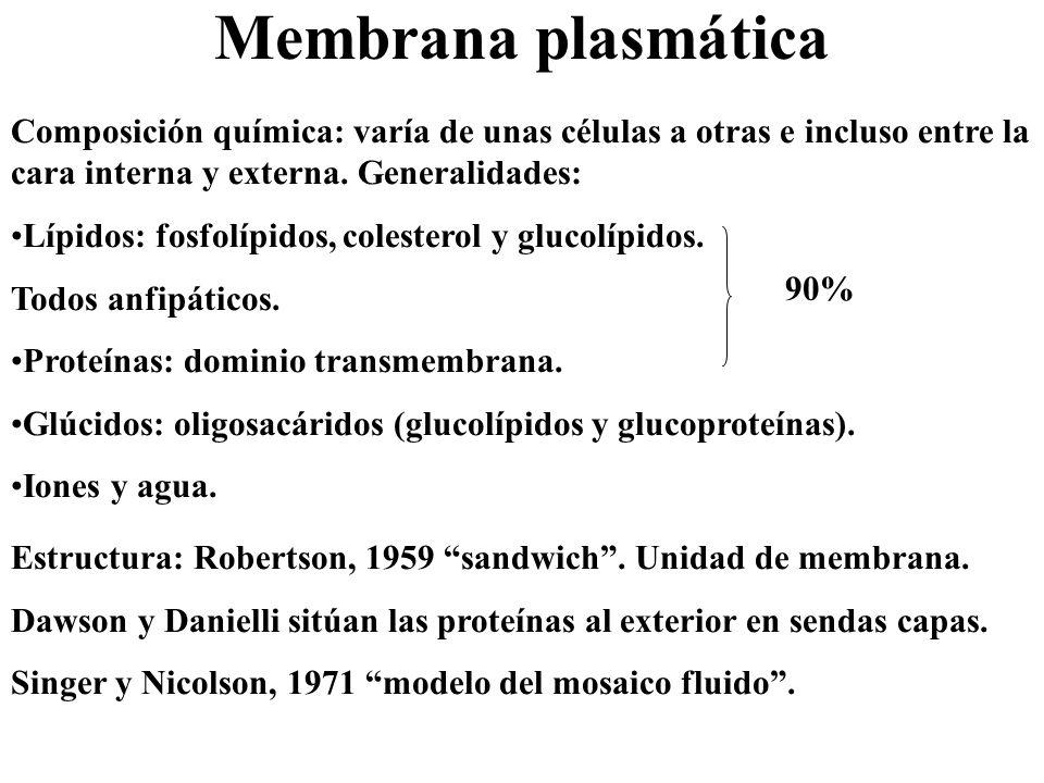 Membrana plasmática Composición química: varía de unas células a otras e incluso entre la cara interna y externa. Generalidades: Lípidos: fosfolípidos