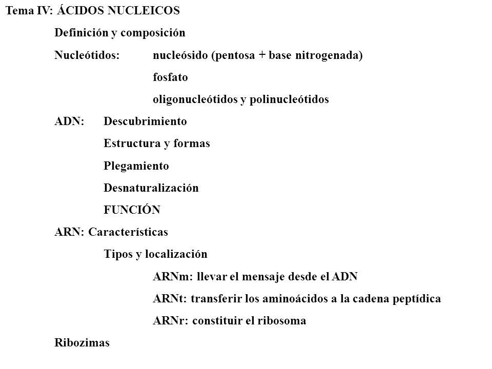 Tema IV: ÁCIDOS NUCLEICOS Definición y composición Nucleótidos: nucleósido (pentosa + base nitrogenada) fosfato oligonucleótidos y polinucleótidos ADN