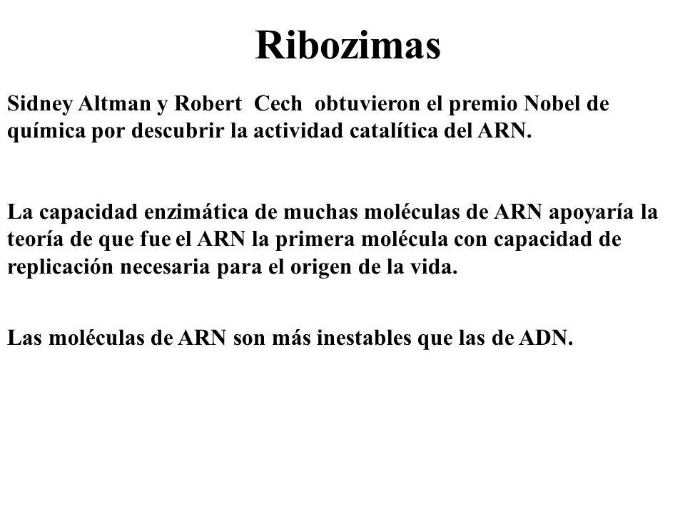 Ribozimas Sidney Altman y Robert Cech obtuvieron el premio Nobel de química por descubrir la actividad catalítica del ARN. La capacidad enzimática de