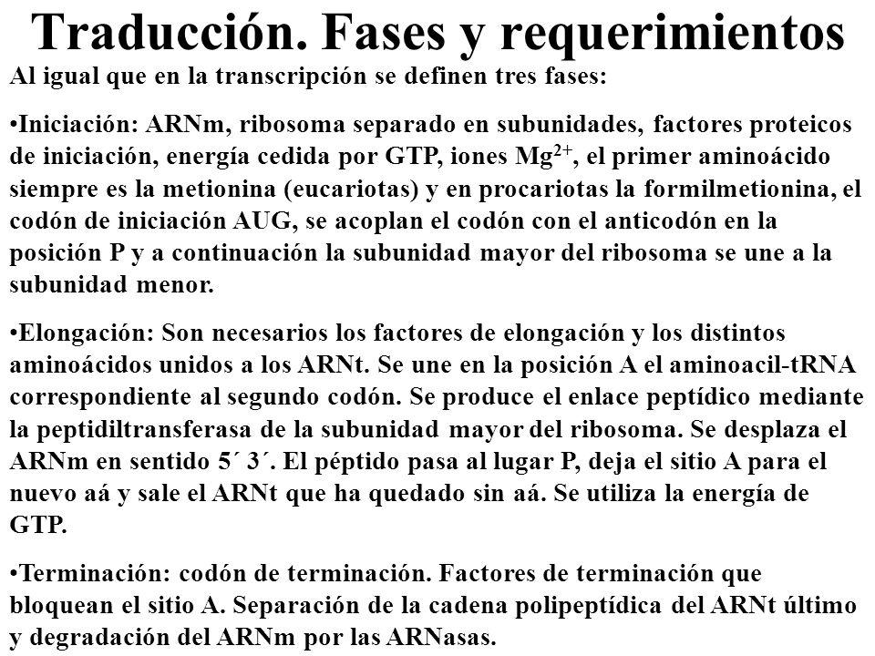 Traducción. Fases y requerimientos Al igual que en la transcripción se definen tres fases: Iniciación: ARNm, ribosoma separado en subunidades, factore