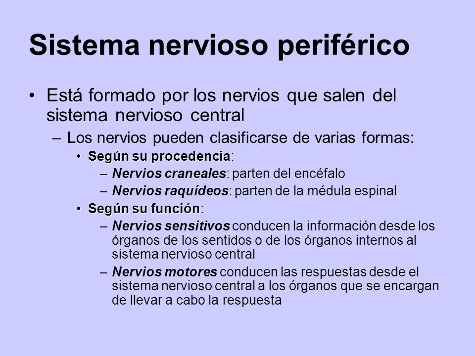 Sistema nervioso periférico Está formado por los nervios que salen del sistema nervioso central –Los nervios pueden clasificarse de varias formas: Seg