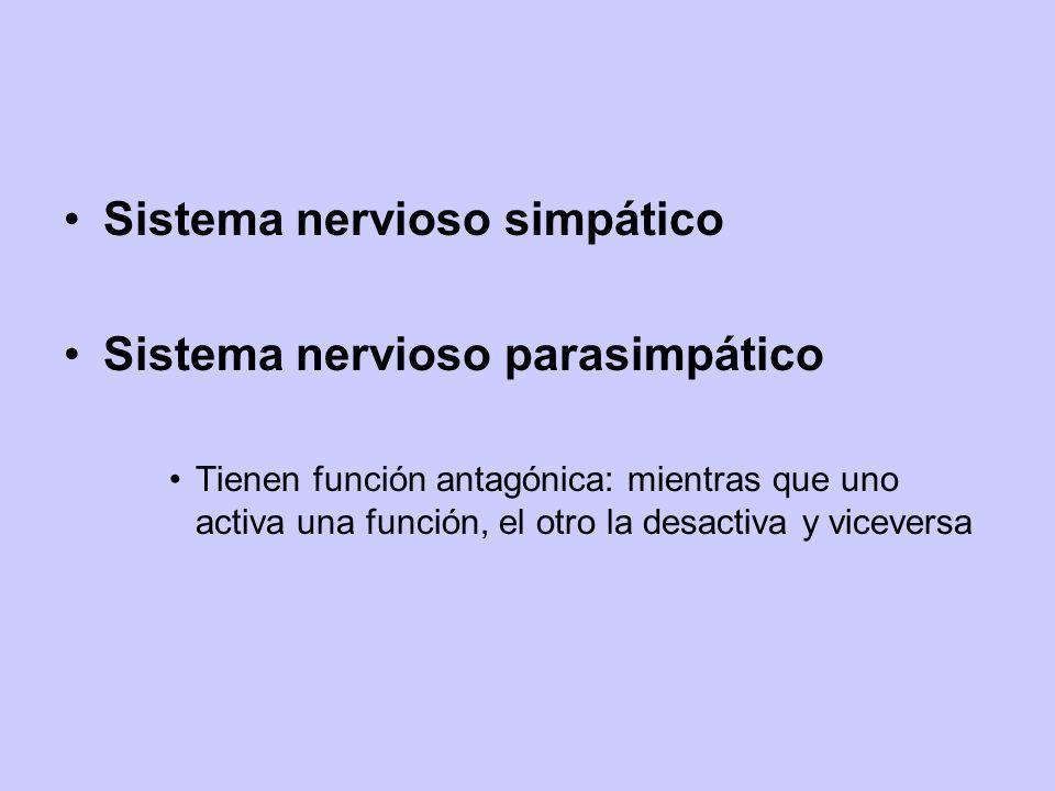 Sistema nervioso simpático Sistema nervioso parasimpático Tienen función antagónica: mientras que uno activa una función, el otro la desactiva y vicev