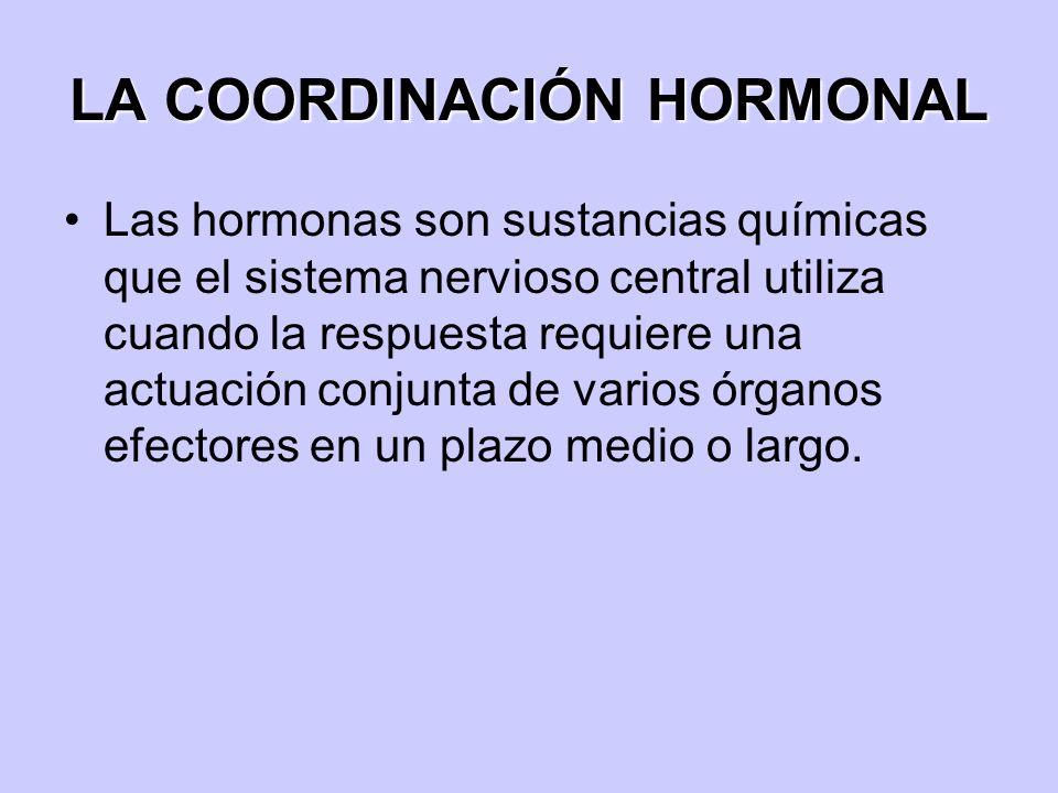 LA COORDINACIÓN HORMONAL Las hormonas son sustancias químicas que el sistema nervioso central utiliza cuando la respuesta requiere una actuación conju