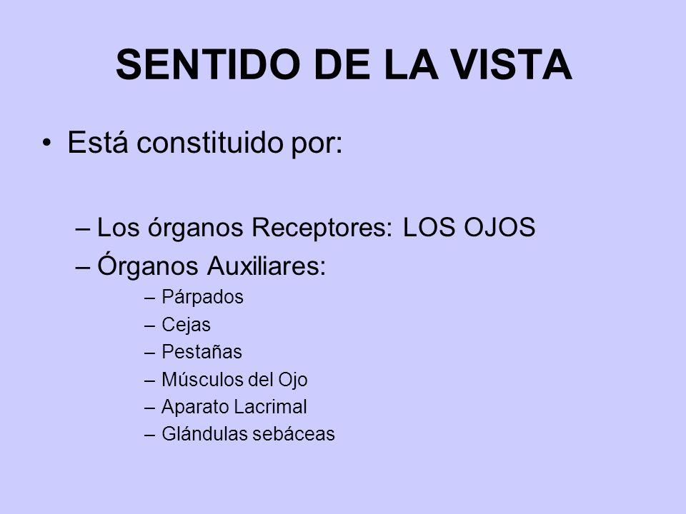 SENTIDO DE LA VISTA Está constituido por: –Los órganos Receptores: LOS OJOS –Órganos Auxiliares: –Párpados –Cejas –Pestañas –Músculos del Ojo –Aparato