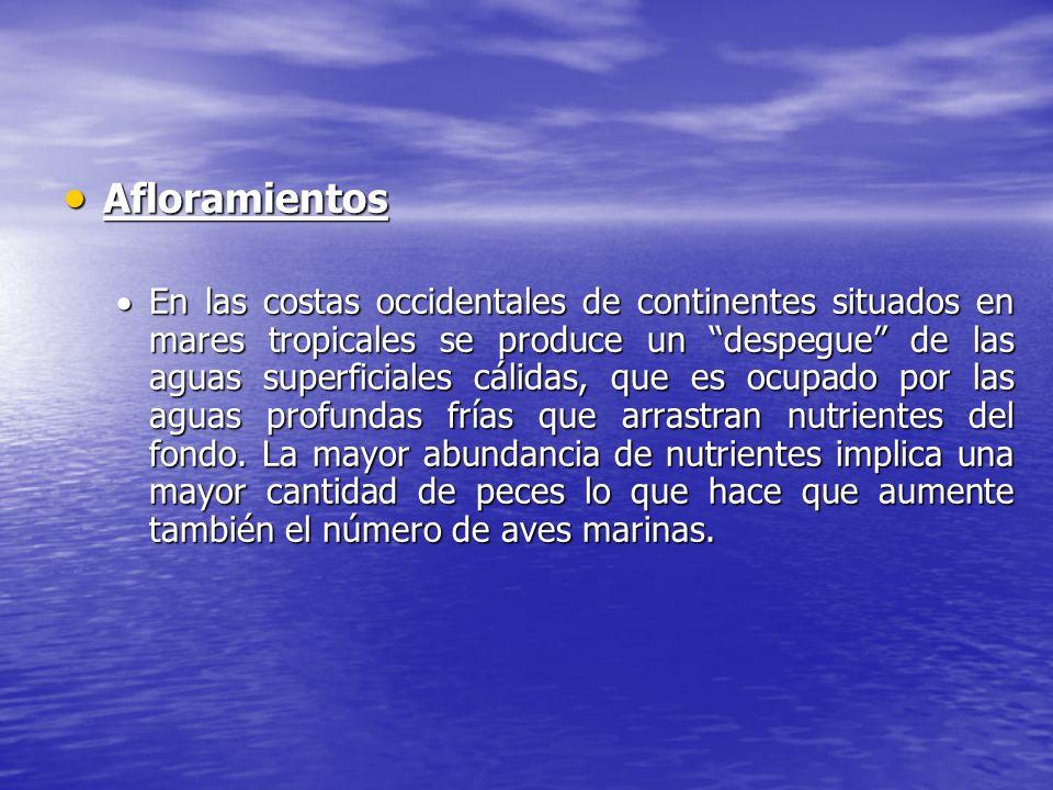 Afloramientos Afloramientos En las costas occidentales de continentes situados en mares tropicales se produce un despegue de las aguas superficiales c