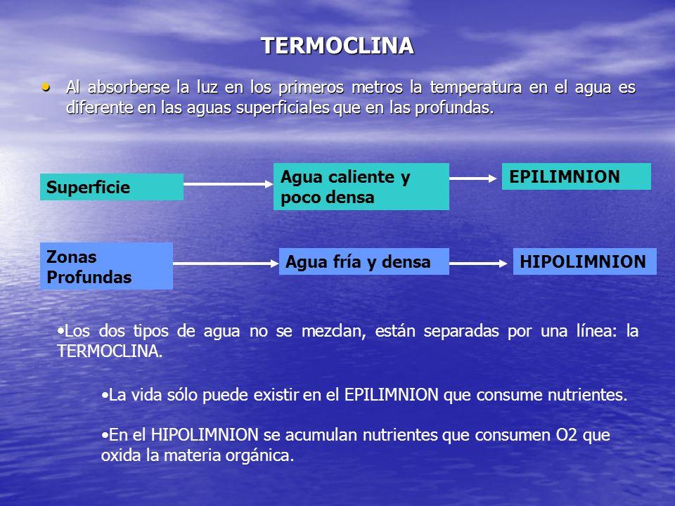 CORRIENTES MARINAS PROFUNDAS Se producen debido a diferencias de tª y salinidad entre mares próximos.