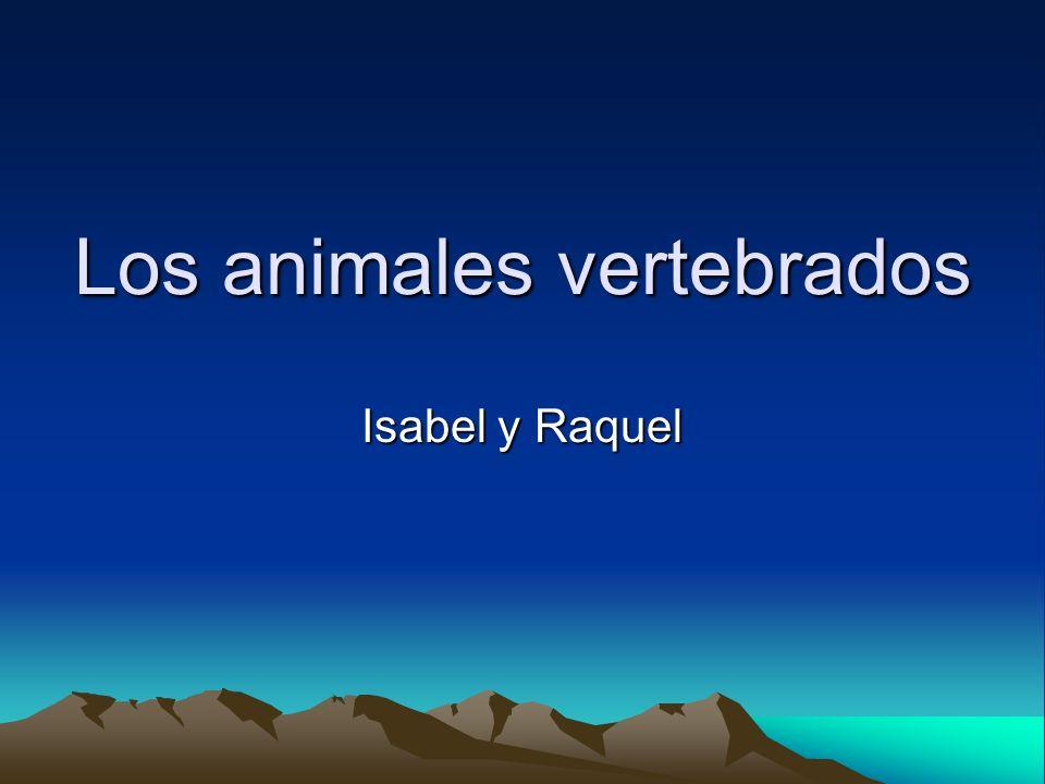 Los animales vertebrados Isabel y Raquel