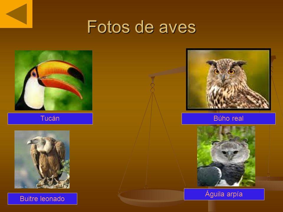 Fotos de aves Tucán Buitre leonado Búho real Águila arpía
