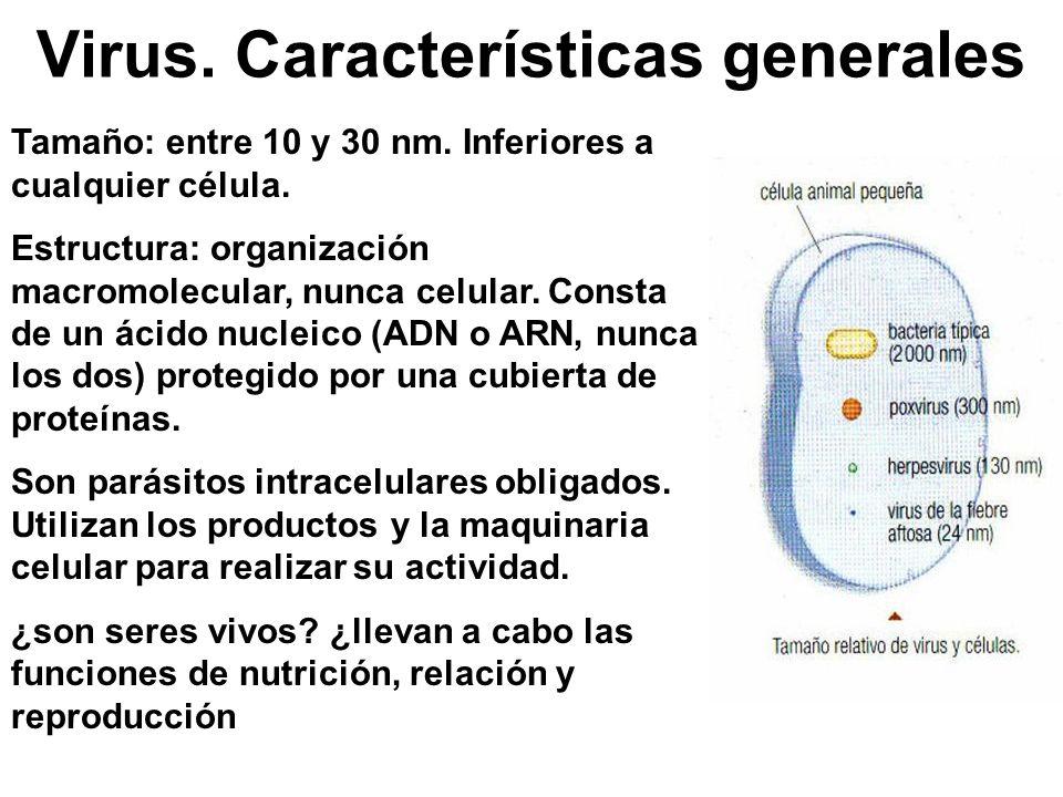 Virus. Características generales Tamaño: entre 10 y 30 nm. Inferiores a cualquier célula. Estructura: organización macromolecular, nunca celular. Cons